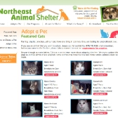 N.E. Animal Shelter: Featured Cats